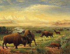 buffalo-fox-great-plains-american-americana-historic-oil-painting-walt-curlee.jpg 900×700 pixels