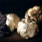Craigie Horsfield - Three garlic bulbs, cabbage leaf (2003)