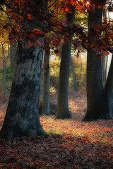I used to just play under these trees. They didn't look like this when I saw them! (by Jerry Gavin, my dad!)