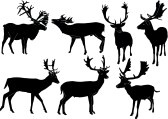 fallow deer collection - vector stock photography