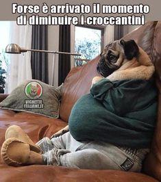 Il cane divanizzato #Alimentari, #Alimenti, #Animali, #Cani, #Cibo, #Dieta, #Diete, #Divertenti, #Funny, #Funnypics, #Humor, #Humour, #Immagini, #Immaginidivertenti, #Italiane, #Lol, #Mangiare, #Meme, #Memeita, #Memeitaliani, #Memes, #Memesita, #Memesitaliani, #Pics, #Umorismo, #Vignette, #VignetteitalianeIt #Animali, #Cani, #Cibo