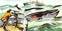 Whale Killers