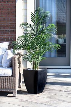 Faux indoor trees, Artificial indoor trees and plants can add a great feeling to any home or office.  #indoortrees #artificialtrees