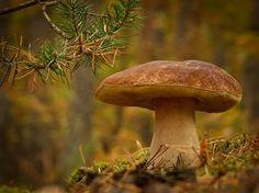 Gallery.ru / Фото #2 - Сказка природы от Вячеслава Мищенко - Clematis