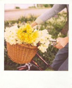 Daffodils AND a bike: what more could you ask for?