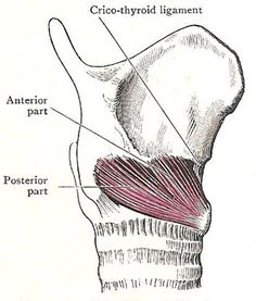 crycothyroid muscle and ligament