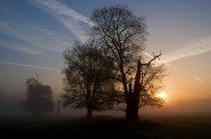Podzimní ráno na jižní Moravě, Pohansko u Břeclavi Trees, Celestial, Sunset, Plants, Outdoor, Pictures, Outdoors, Tree Structure, Sunsets