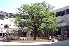 Oak Court, Midsummer Place, Central Milton Keynes.