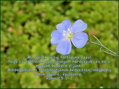 Dandelion, Plants, Dandelions, Plant, Taraxacum Officinale, Planets