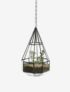 gorgeous hanging terrarium / planter
