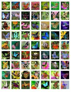 Butterflies Printable Digital Collage Sheet by shadowdancer2, $3.00