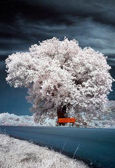 trees..
