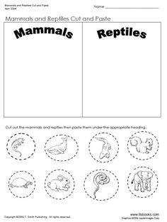 Day 32 – Mammal and Reptiles Cut and Paste Worksheet - Grande Mammals Reptiles Preschool, Les Reptiles, Reptiles And Amphibians, 1st Grade Science, Kindergarten Science, Kindergarten Worksheets, Kindergarten Social Studies, Primary Science, Elementary Science