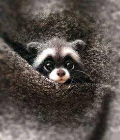 The Animals, Cute Little Animals, Felt Animals, Baby Animals Super Cute, Strange Animals, Pet Raccoon, Fox Dog, Dog Cat, Wool Needle Felting