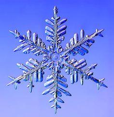 Fernlike Stellar Dendrites by Kenneth Libbrecht via staple news tinyurl.com/7j45 pinterest.com/... #Snowflake #Kenneth_Libbrecht