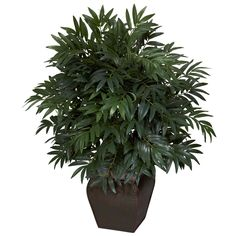 Double Bamboo Palm w/Decorative Planter Silk Plant - When two is better than one! This unique offering combines two faux bamboo palms into an intricately designed planter, giving it a fullness that is unsurpassed. In fact, it's has such body that you'll be wondering what's hiding inside! Trust us, if you like lush greenery, but hate watering, this is the PERFECT silk plant for you. Makes a great gift as well. Number of Trunks: NA Number of Flowers: NA Number of Leaves: NA Pot Size: W: 9 in…