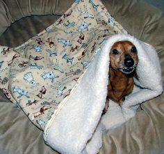 Dachshund Snuggle Bags - Need to make this for my little guy!