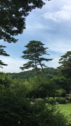 anmyon natural forest, west sea, Korea