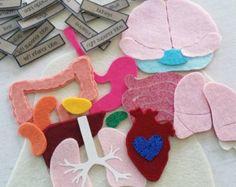 Body Organs Human Anatomy Felt Board by CircleTimeDesigns on Etsy Kid Science, Preschool Science, Science Activities, Activities For Kids, Science Toys, Human Body Organs, Human Body Systems, Stem Projects, Science Projects