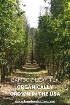 Organically grown bamboo products from Florida. We have been growing bamboos here on our farm for 23 years and have been making teas, tinctures, hydrosols, and skin care elixirs for 15 years. We love what we do. Bamboo Products, Organic Supplements, Bamboo Leaves, How To Make Tea, 15 Years, Teas, Florida, Country Roads, Skin Care