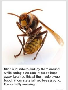 Slice Cucumbers To Keep Bees Away