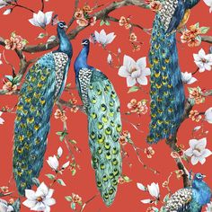 Victorian Peacock x Peel and Stick Wallpaper Roll Peacock Wallpaper, Chinoiserie Wallpaper, Red Wallpaper, Animal Wallpaper, Peel And Stick Wallpaper, Pattern Wallpaper, Wallpaper Designs, Modern Wallpaper, Frames