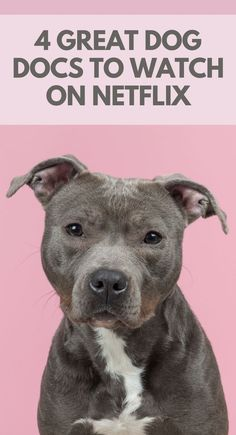 4 Great Dog Documentaries Available on Netflix.