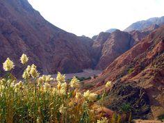 Egypt - foothills of Sinai | by stuart__matthews