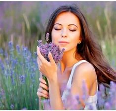 Are you looking for a career change - we're recruiting! Violet Garden, Lavender Garden, Purple Garden, Lavender Fields, Colorful Garden, Lavender Oil, Lavendar Painting, French Lavender, Career Change