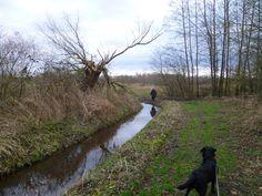 2014-02-09 Oude boomstronken passen goed in natuurgebied Hagenbeek