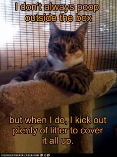 The Most Interesting Cat in the World - Can't Make Things Too Easy.