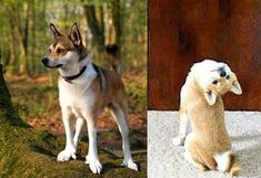 13 Coolest-Looking Dog Breeds....Norwegian Lundehund