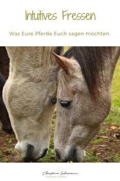 Saag, Goats, Horses, Animals, All About Horses, Horse Feed, Beautiful Horses, Horseback Riding, Animales