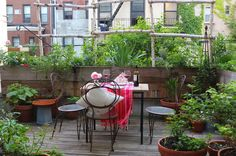 66 Square Feet (Plus): Life on the Harlem terrace