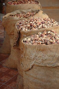 La grande oasi di Siwa si trova nella zona desertica dell'Egitto nord occidentale. Le tre cultivar di #datteri più importanti che vi si producono sono la siwi, la frehi e la azzawi, tutte locali. Il Presidio valorizza i datteri di migliore qualità dell'oasi, facendoli conoscere sul mercato nazionale e internazionale e aiuta i coltivatori a raggiungere un'autonomia nelle fasi di lavorazione e confezionamento. #Egitto #SlowFood #SaloneDelGusto