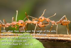 "Ants talk to each other. Subhan Allah! In the past, the so called ""rationalists"" have mocked at the Qur'an stating it to be a fairy tale book in which ants talk to each other and communicate sophisticated messages! Allah revealed this knowledge in the Quran 1400 years ago. Verily, He knows the secrets of heaven and earth.  Check this clip from ABC News: http://www.youtube.com/watch?v=AkZ56u3ZUk8  Surah An-Naml (The Ants) with English Translation. http://www.youtube.com/watch?v=lcUZMRDb7vI"