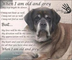 When I am old and grey.Oh how I love those grey faces :) Old dogs are the best I Love Dogs, Puppy Love, Huge Dogs, Game Mode, Animals And Pets, Cute Animals, Pet Loss Grief, Dog Poems, Horse Poems
