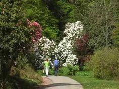 Rhododendron ültetése ápolása - Rhododendron gondozása