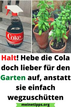 Garden Types, Spray Bottle, Garden Design, Diy Home Decor, Anstatt, Hacks, Cleaning, Make It Yourself, Green