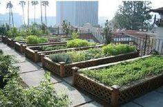 urban veggie garden orto biodinamico biologico urbano