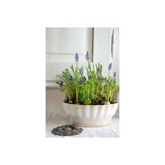 Springtime…. ❤ liked on Polyvore featuring home and home decor