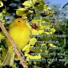 Psalm I will praise thee; for I am fearfully and wonderfully made: marvellous are thy wor Scripture Cards, Bible Scriptures, Bible Quotes, Praise Dance, Praise And Worship, Christian Posters, Christian Quotes, Psalm 139 14, King James Bible Verses