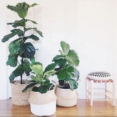Indoor plants in rice baskets are having a moment.