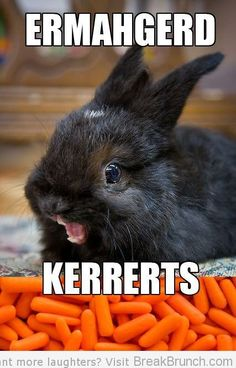 OMG, so many carrots!