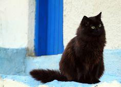 Fluffy Black Cat in Mytilini, Greece. Corfu travel guide by Corfu2travel.com