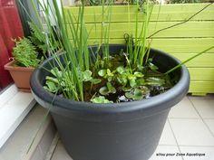 Un mini bassin pour mettre sur la terrasse jardin pinterest pi ces de - Mini bassin de jardin ...