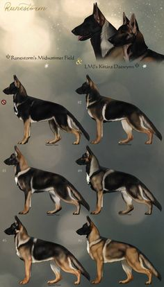 GSD Litter- Bash x Kinara Closed by Runestorm-kennel on DeviantArt Animal Drawings, Art Drawings, German Shepherd Breeds, Gsd Dog, Real Dog, Creature Concept Art, Art Reference Poses, Drawing Techniques, Fantasy Creatures