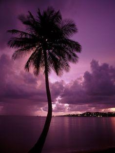 Love palm trees!