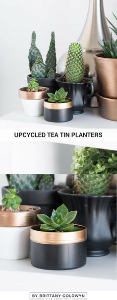 Tiny tea tin planter upcycle in 10 minutes