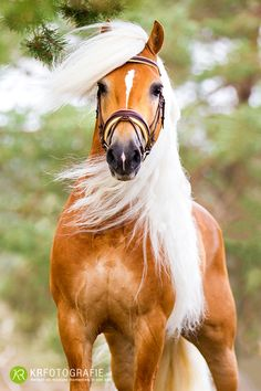 gorgeous horse, head, color and mane. he's something else!